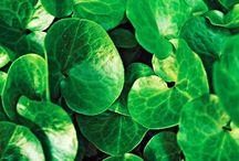 Kasvien tekstuuri, erilaiset lehdet ja muodot