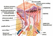 skin anatomy and skin health