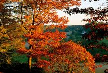 Autumn colours / Beautiful autumn colours