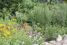 Wild Gardens for Wildlife