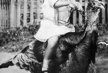 Avoir une mémoire d'éléphant