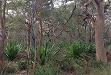 Australian Native Garden Design Inspiration