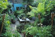 A Retreat, Clever Urban Or Otherwise, With Fern