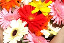 flower / by k eri