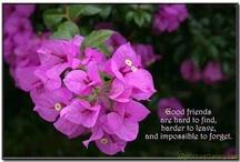 Friendship  / Friends enter us for a lifetime, a season or a reason. Cherish them all!