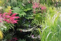 Bog Gardens / Bog gardens are usually on the fringe of a pond or could just be a permanently wet low lying area of your garden.  They can be natural or man-made.  This looks at creating bog gardens and suitable plants .