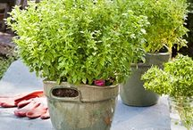 Herbs Worth Growing...and Eating! / by Bonnie Plants