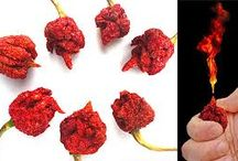 Trinidad Scorpion / Worlds hottest chili- amazing value at www.firehousechilli.com with free worldwide delivery.