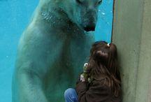Animals - Zoo