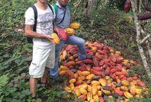 Voyage aux Pays du Cacao