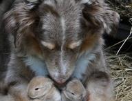 Pups / by Ashten Crutcher