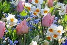Spring Time / Spring