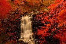 Fall / The beauty of fall.