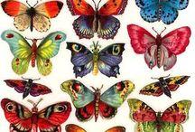 dekopaj kelebek