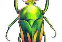 Ilustrações de insectos