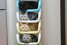 Cute Pet Pics!