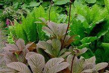 """Plants for a """"tropical"""" garden"""