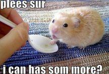 Hamsters ! ( tootsie roll )