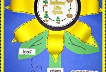 Grade 1 Science / by Melanie Dromarsky