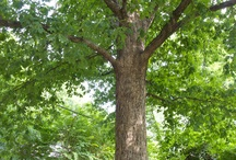 The tree that owns itself