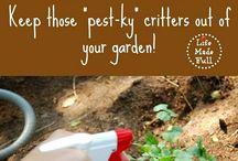 Home made pesticide