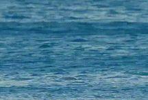 Дельфины и пр.