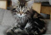 Cats cats cats❤️❤️