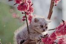 Kitties / Kitties Kitties Kitties.             Aaawwww!!!!!!!!      DE FUZZIES!!!!!!!!!!!!!!!!