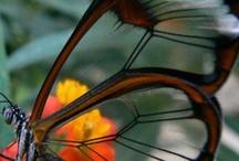 Butterflies / by Jessica Hopkins