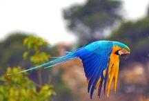 Our Bird lover