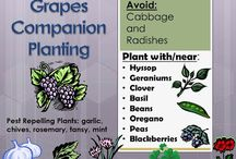 Tips about Companion Planting / Board dedicated to the world of companion planting!