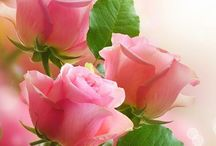 Flowers (Love Them!!) / Beautiful!! Love them.