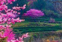 Tree - Forest - Garden - Flower