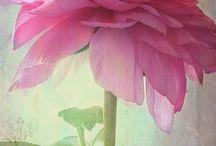 Kedvenc virágaim- flowers.. / Virágok-vegyesen..mindenféle.
