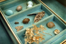 nature collector / nature collector, nature collection, collecting with children
