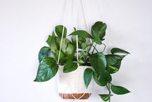 Pots and plant hangers