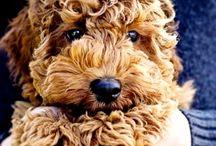 Perros lindos
