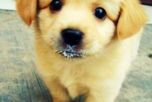 Puppies and dogs! / Cute puppies and dogs