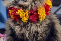 Flower Power Kitties