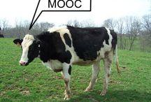 MOOC Meme