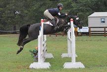 Belafonte d'Avalon / 2008 Black 14:3 hh German Riding Pony
