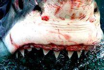 Sharks / Anything sharks / by Suzette Madeiros Sailsman