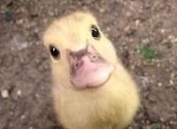 Duck!!!!