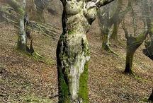 kulonleges fak