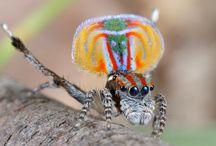 Arañas - Animales