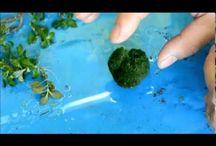aquaplants