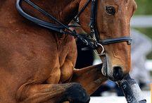 Secretly Fancy Equestrian