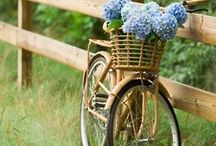 Bikes, Bikes,and more Bikes / by Ellie J
