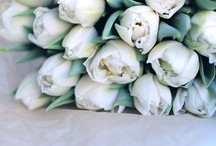 Kauniita kukkia