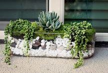 Succulents / by Erika Saeppa Lovingfoss